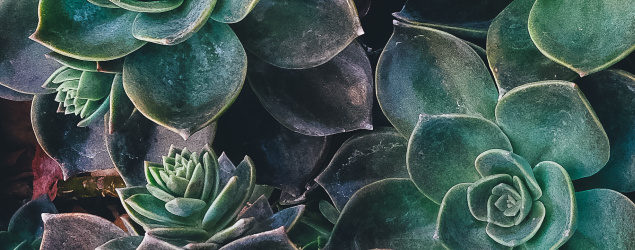 cropped-succulents-2.jpg