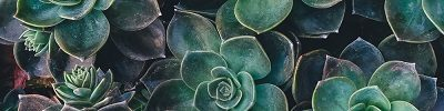cropped-succulents2.jpg